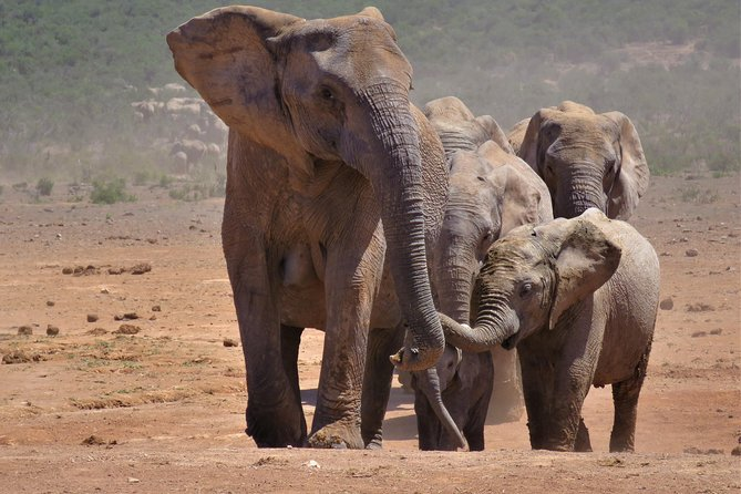 Private Guided Tour for Elephant viewing in Addo Elephant National Park