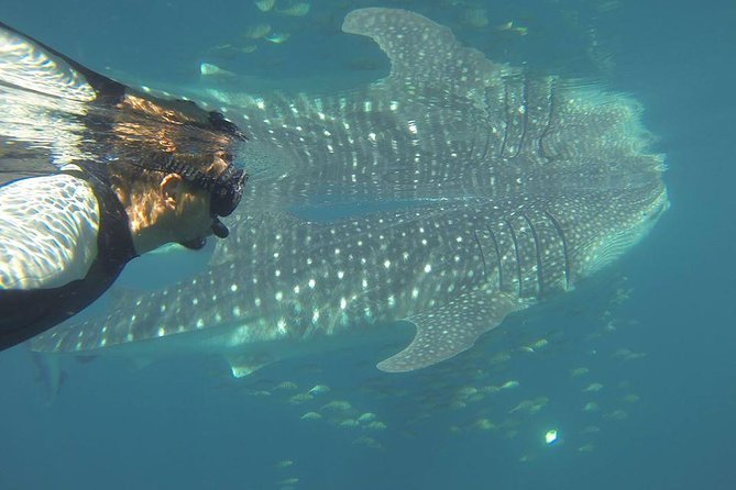 Whale Shark Encounter in La Paz photo 1