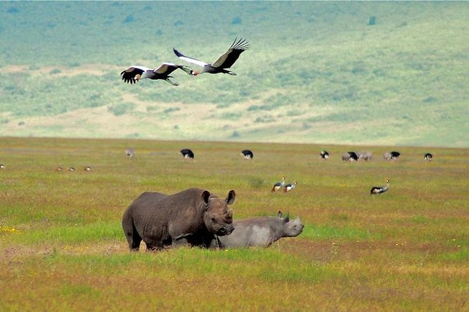 Ngorongoro Crater | Day Tour