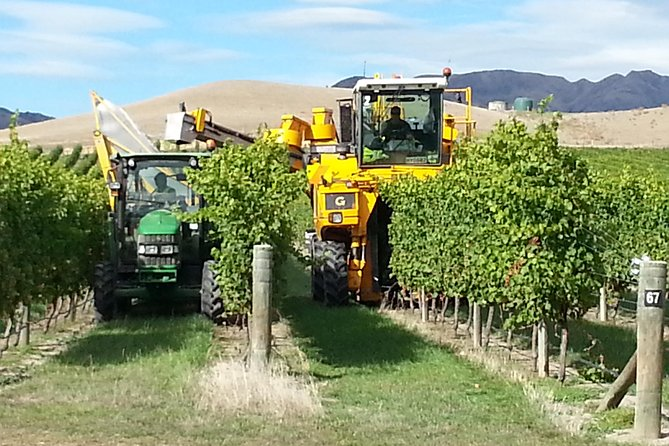 Waipara Wine Trail Afternoon Tour from Christchurch photo 7