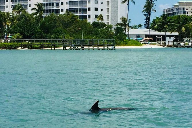 Dolphin Tours - Fort Myers Beach / Estero Bay photo 15