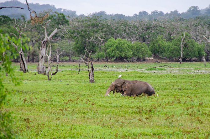 Wilpattu Wildlife Safari and Cultural Tour in a day