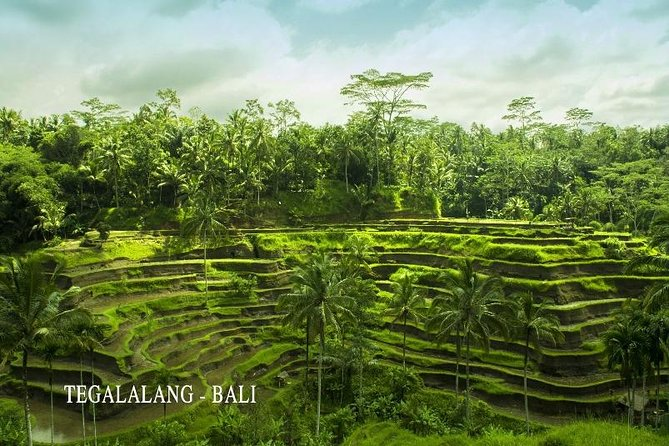 Full Day Tegalalang & Ubud Tour