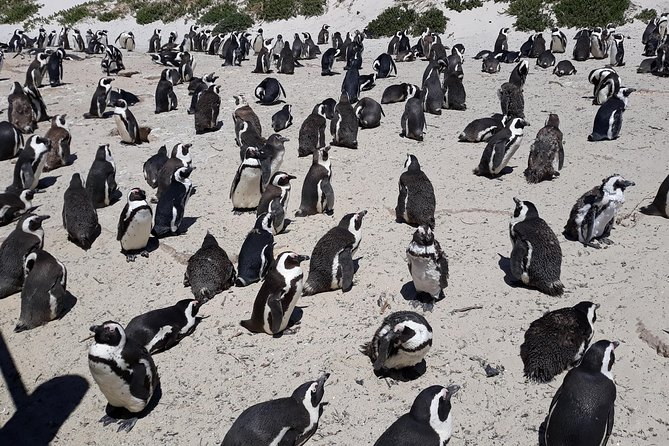 Half day Penguins and wine tasting in private car, pay per car not per person