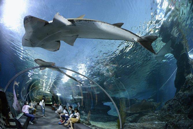 Pattaya Underwater World Tickest And Optional Hotel Pick up