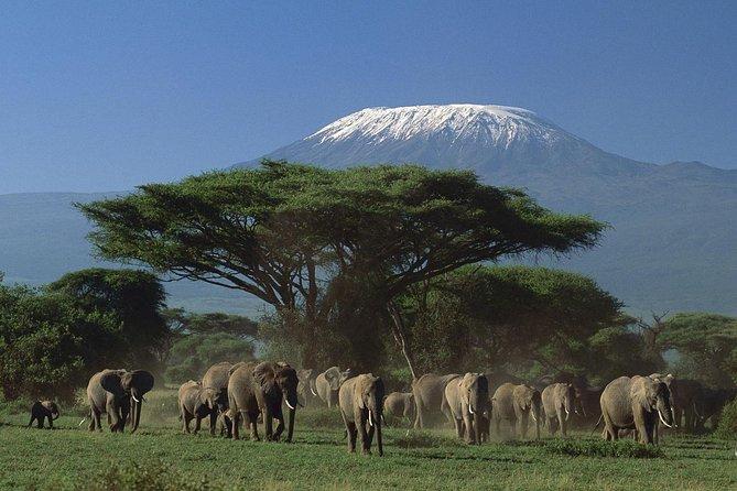 Amboseli Tented Camp 3 Days Safari