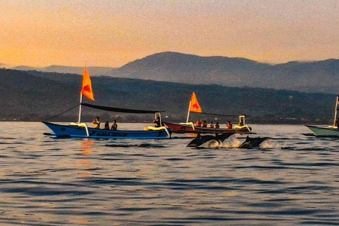 Bali Dolphin