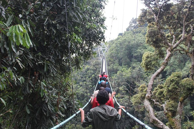 1 Day Trip In Nyungwe national park