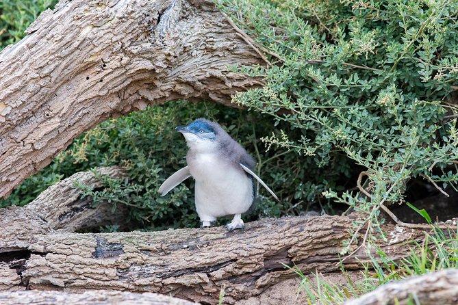 Phillip Island Half Day Private Experience