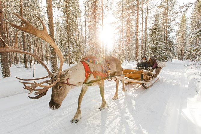 Lapland Reindeer and Husky Safari from Rovaniemi