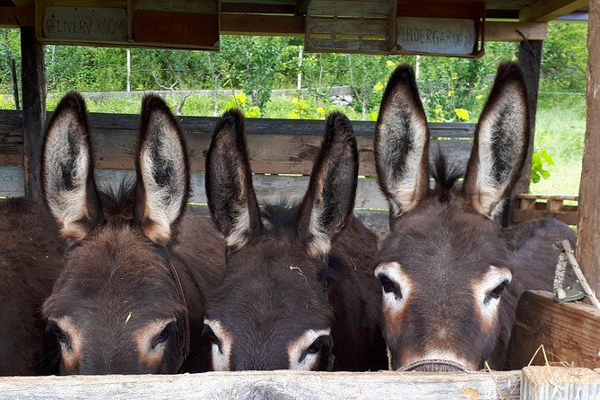 Book Your Donkey Farm Tour