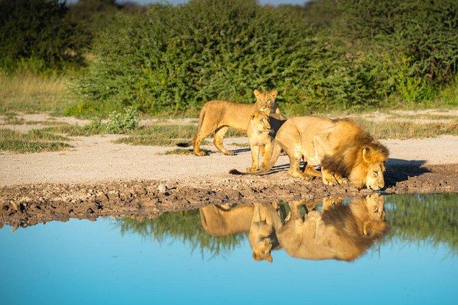 6 days Botswana Okavango & Moremi private mobile safari