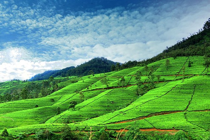 Nuwaraeliya day trip from Kandy
