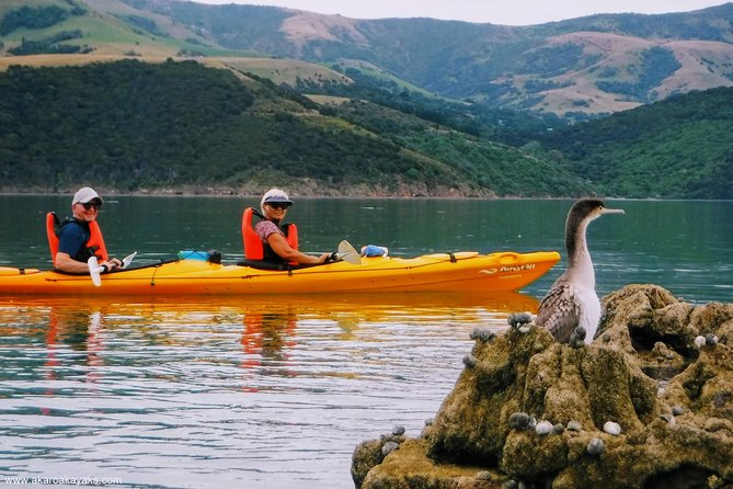 Shore Excursion: Guided Sea Kayaking through Akaroa Marine Reserve