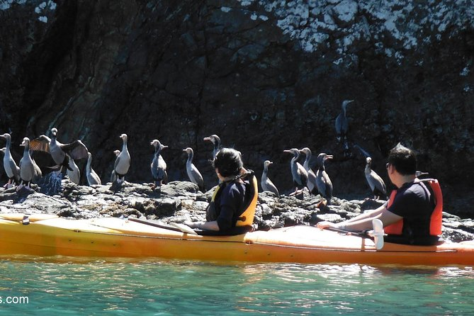 Sunrise wildlife sea kayaking in Akaroa marine reserve