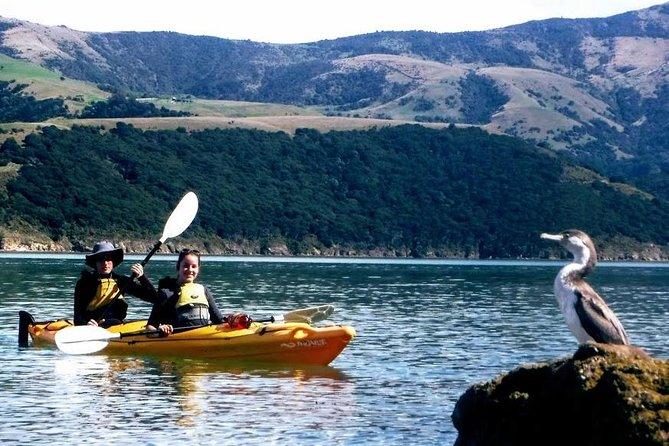 Small group guided sea kayaking in Akaroa marine reserve
