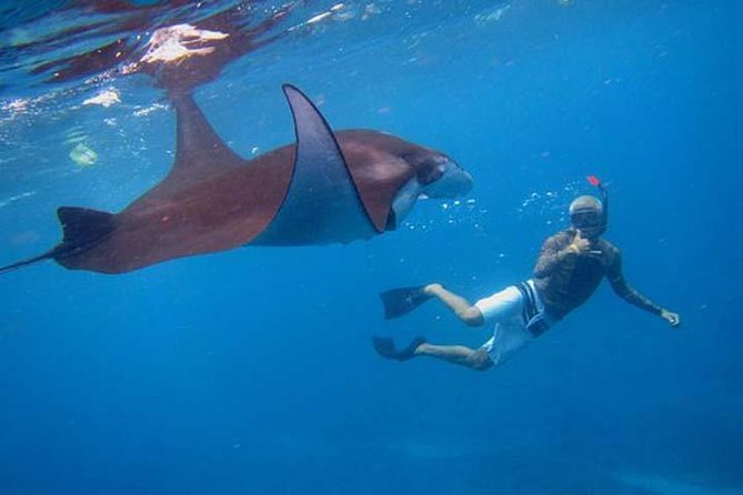 Swim with Manta Rays in Nusa Penida - ALL inclusive