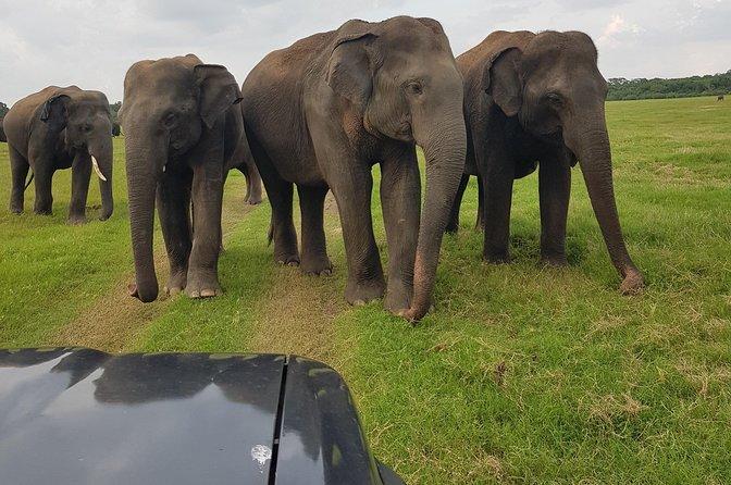 Jeep safari adventure -wild elephants in their natural habitat