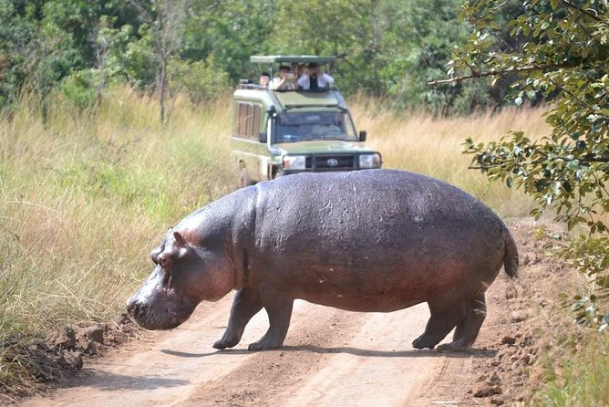 1 Day Safari to Akagera national park photo 2