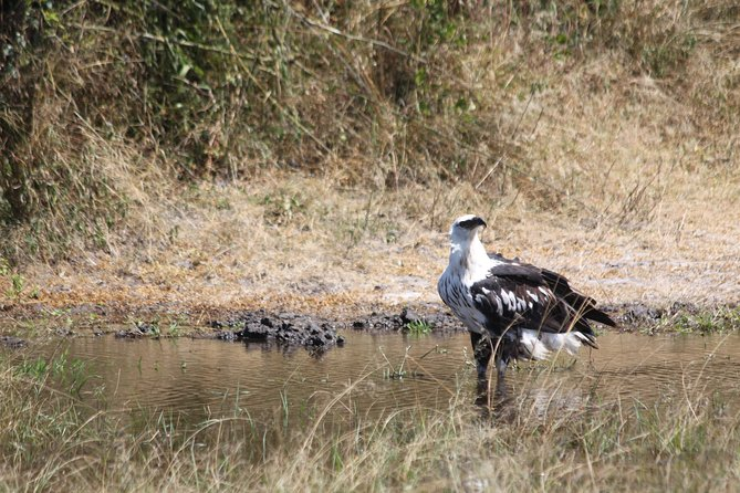1 Day Safari to Akagera national park photo 3