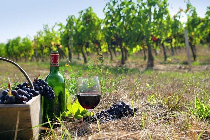 8-hour Cultural Tour in Athens and Nemea Wine Tour shore excursion