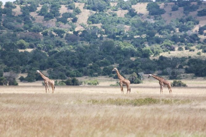 1 Day Safari to Akagera national park photo 8
