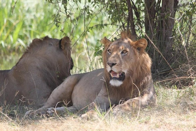 1 Day Safari to Akagera national park photo 11