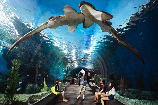 Underwater World Pattaya with Optional Hotel Transfers