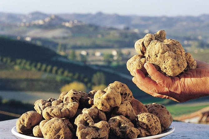 Private Truffle Hunting Experience