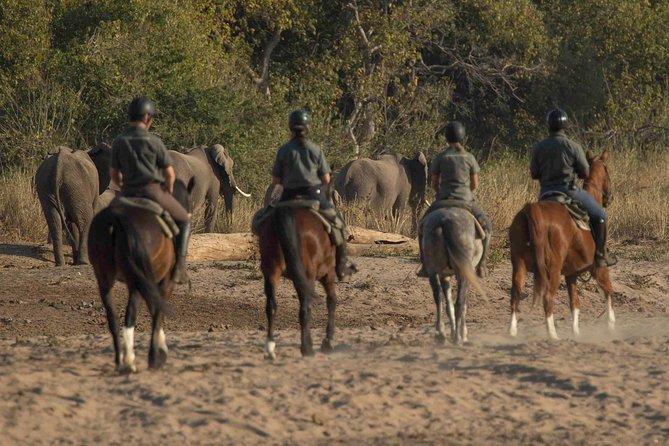 Horse Riding Safari Botswana 7 Nights