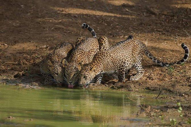 Yala National Park Full Day Safari from Hambantota Cruise Terminal