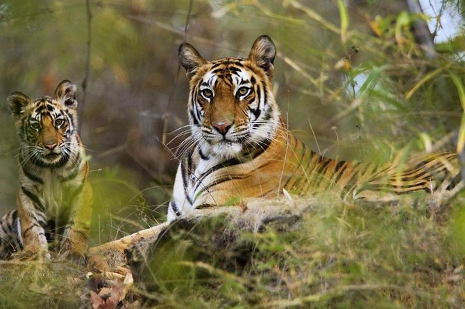 Tourism in Panna Tiger Reserve. photo 1