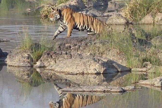 Tourism in Panna Tiger Reserve. photo 4