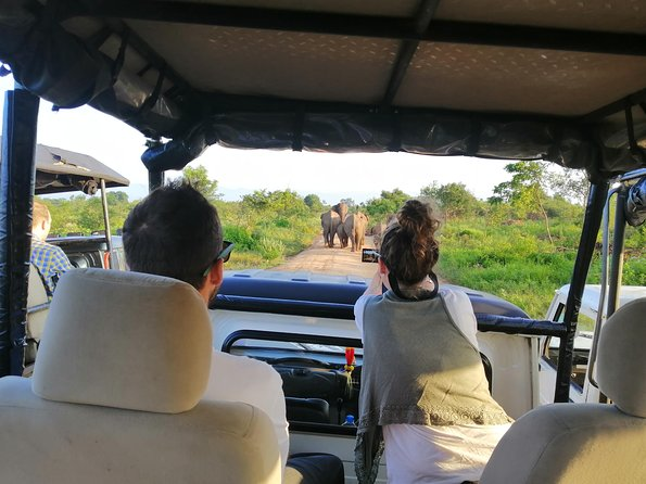 Jeep Safari To See The Elephant Gathering In Kaudulla National Park