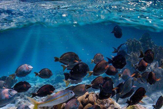 Private Snorkeling lesson Bonaire