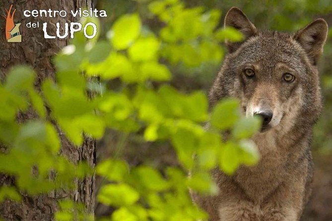 Wolf Visitor Center - Guided tour