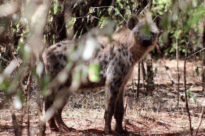 Wildlife and Heritage Tour of Nairobi