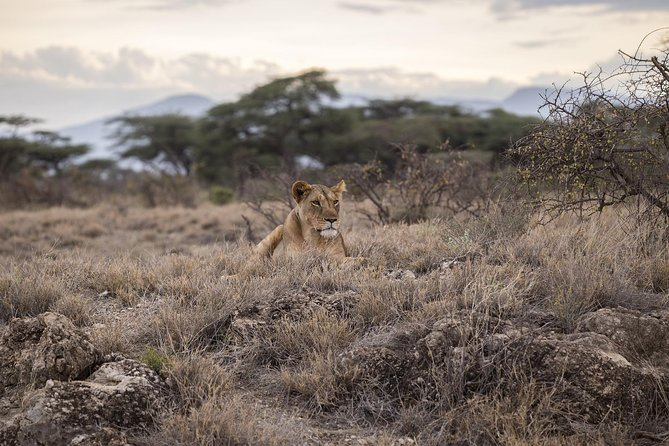 Day Trip - Tarangire National Park