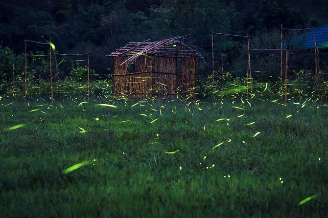 Totláli fireflies sighting