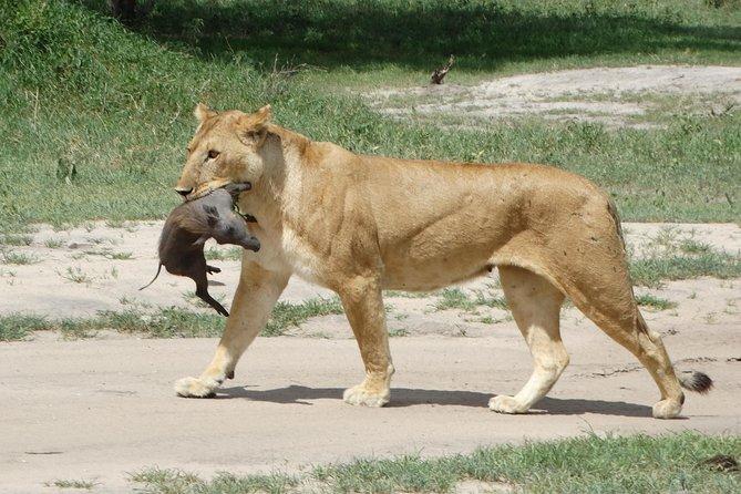 Big 5 Safari to Tarangire NP, Ngorongoro Crater and Lake Manyara NP - 3 Days