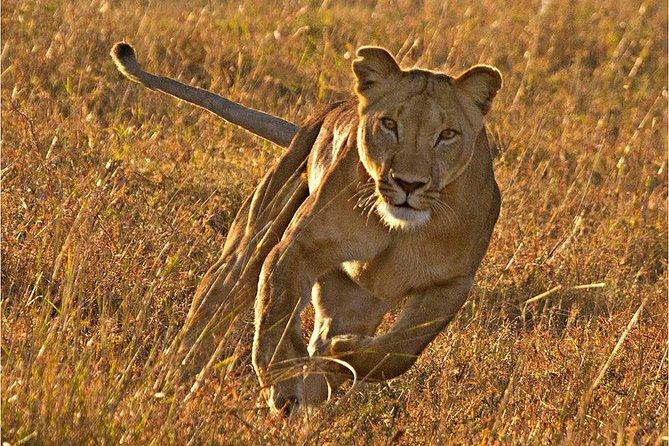 Masai Mara 3 Days Luxury Tented Safari