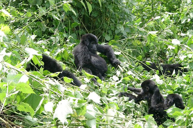 Gorilla Trekking Wildlife 7 Days Uganda Safari photo 9