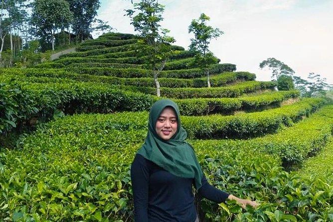 enjoy the environment at Nglinggo Tea Plantation