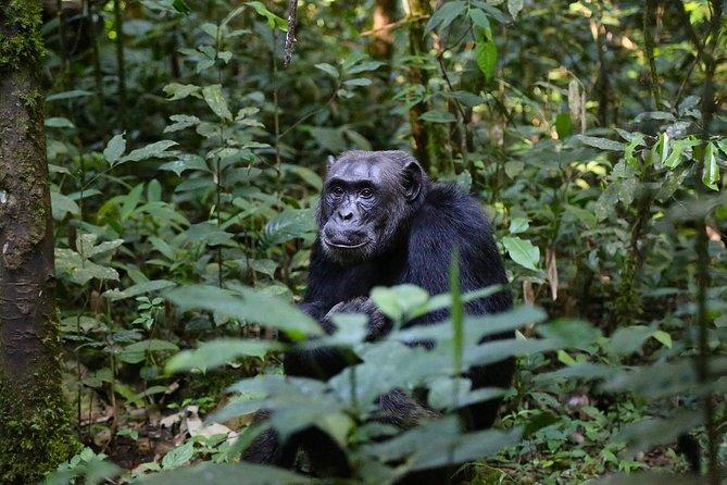 Queen Elizabeth and Kibale Chimpanzee Wildlife 5 Days Uganda Safari