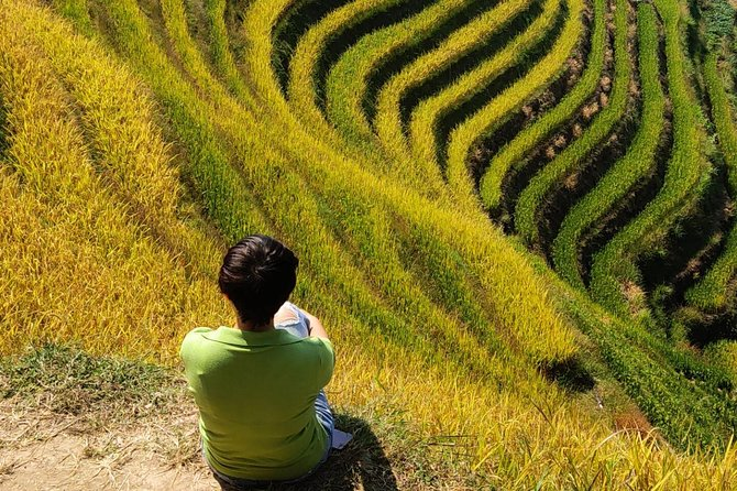 Longji Rice Terraces Day Tour from Yangshuo hotel
