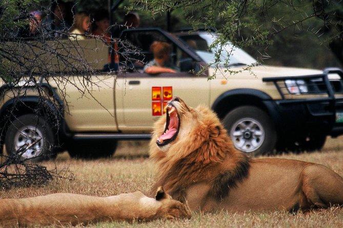Pilanesberg Safari Game Viewing- Lions