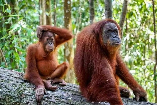 2 days overnight Bukit lawang jungle trekking
