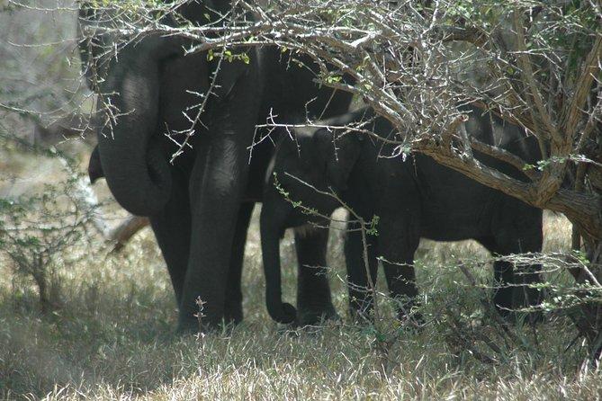 Full Day Safari Tours in Yala National Park