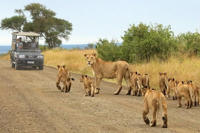 Private Shuttle Service from Johannesburg to Kruger National Park photo 2