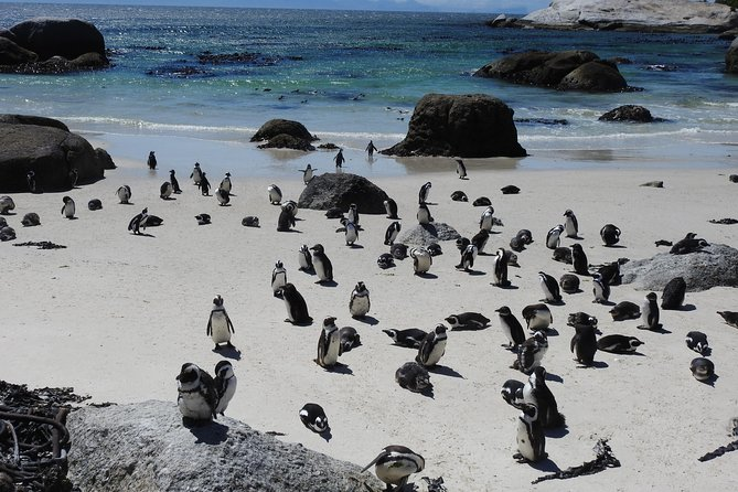 Cape of Good Hope And Penguin Colony Small Group Tour